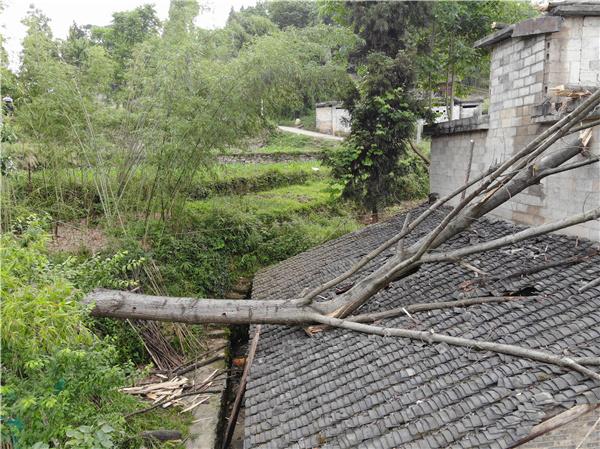 01大树砸屋顶.jpg